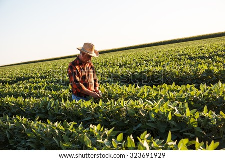 Portrait of senior farmer in a field examining crop - stock photo