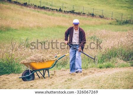 Portrait of senior man raking hay with pitchfork and wheelbarrow on a field - stock photo