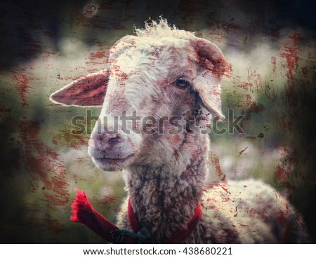 Portrait of sheep in a meadow with blood stains. - stock photo