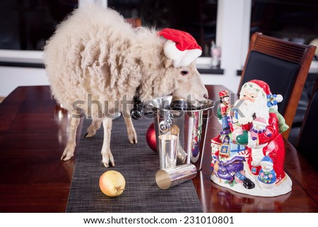 Portrait Of sheep in christmas hat  - stock photo