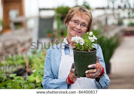Portrait of smiling senior woman holding flower pot - stock photo