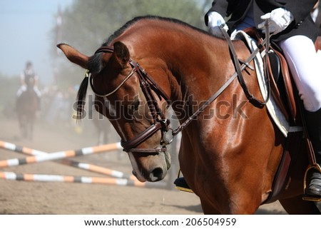 Portrait of sport brown horse during competition - stock photo