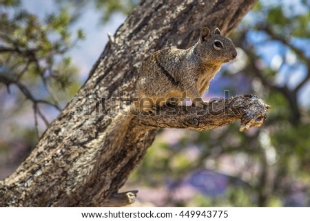Portrait of squirrel on tree, Grand Canyon, Arizona, USA.
