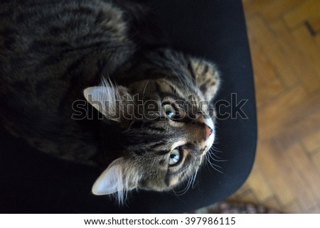 Portrait of Tabby Cat - Top View - stock photo
