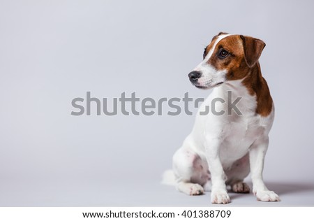 portrait of the cute dog on the white background - stock photo