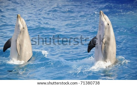 Portrait of the dolphins, who has been put out from water. - stock photo