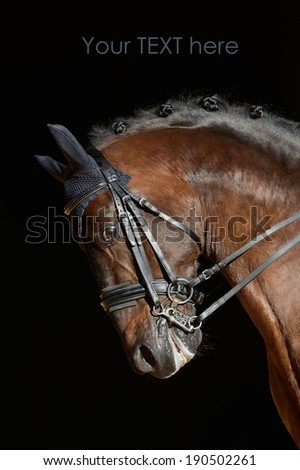 Portrait of the dressage sport horse - stock photo