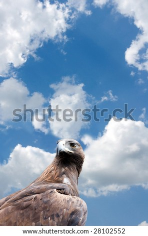portrait of the eagle on background of the blue sky