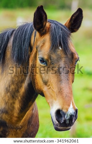 Portrait of the Horse - stock photo