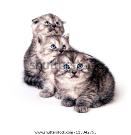 Portrait of three cute kittens looking away isolated on white studio background