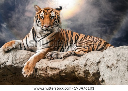 portrait of tiger lie down on rock with ray and spectacular sky   - stock photo