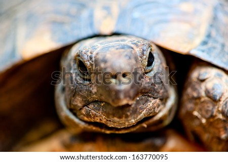 portrait of tortoise close up - stock photo