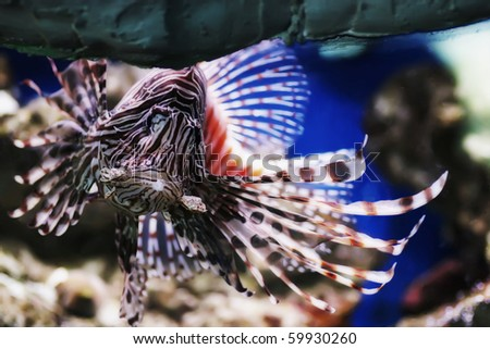 portrait of tropical fish in an aquarium