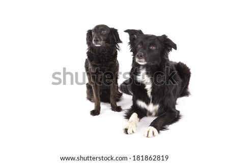 Portrait of two dogs - stock photo