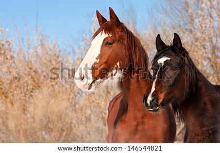 Portrait of two horses in winter