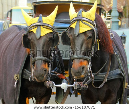 Portrait of two nice coach fellow crow horses dressed in traditional yellow cap at winter. Christmas days in old city of Vienna, Austria, Central Europe  - stock photo