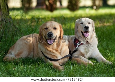 Portrait of two young dogs playing in the meadow - stock photo