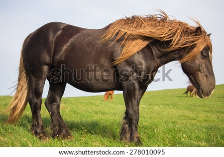 Portrait of wild big stallion in the park of Subasio mountain, Umbria - Italy. - stock photo