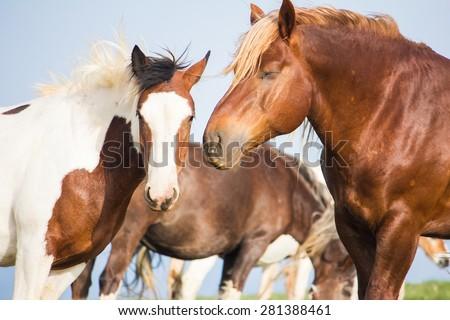 Portrait of wild horses - stock photo