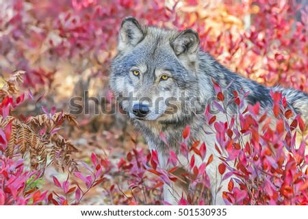 Portrait of wolf in fall blueberry bushes,photo art