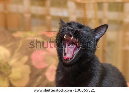 Portrait of yawning black cat with closed eyes. - stock photo