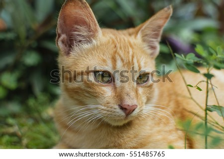 Portrait of yellow cat isolated on green background