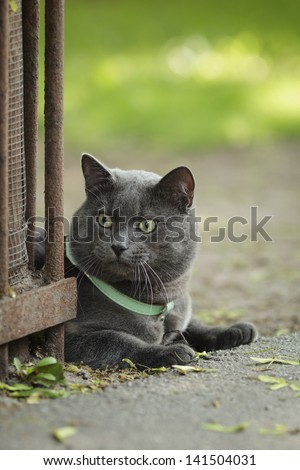 portrait of young british cat siting on walkway, vertical - stock photo