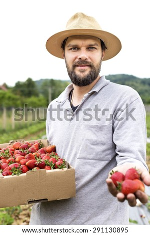 Portrait of young farmer in a strawberry field presenting his harvest,red fresh picked strawberries - stock photo