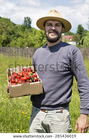 Portrait of young farmer in strawberry field holding a cardboard box full with fresh red strawberries