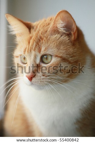 portrait of young red cat - stock photo
