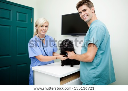 Portrait of young veterinarian doctors in scrubs measuring heart rate of dog - stock photo