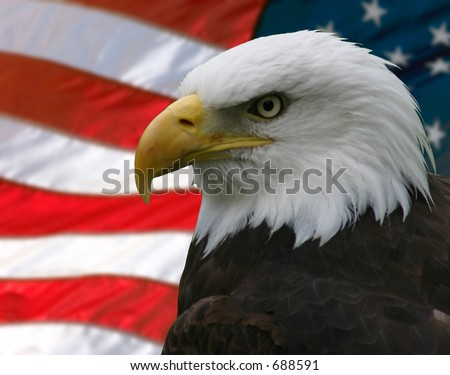 Portrait/Profile of a bald eagle, taken from the side, slightly off-centre; superimposed over the American flag. - stock photo