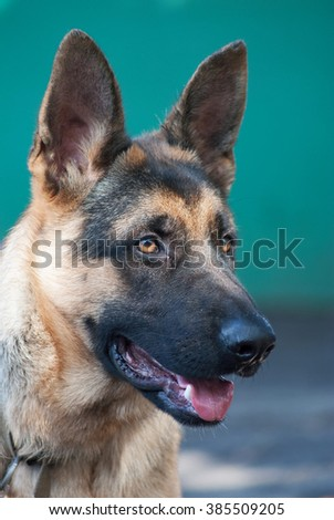 portrait rural Shepherd - stock photo