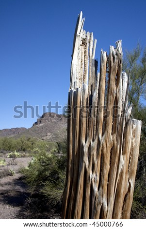 Portrait saguaro cactus ribs with blue sky, mountain and desert plants in the background