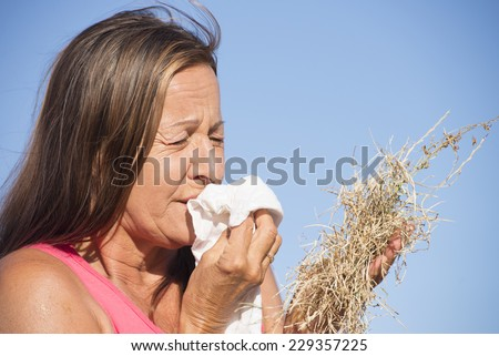 Portrait stressed mature woman suffering from seasonal hay fever allergy, holding bunch of dry straw grass, sneezing into handkerchief tissue, blurred outdoor background and copy space. - stock photo