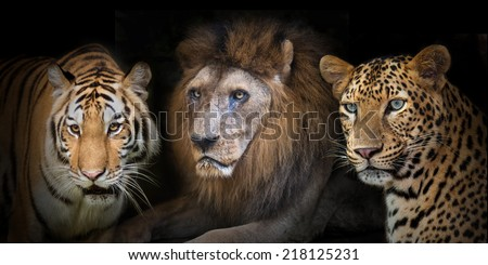 Portrait tiger, lion, leopard isolated on black background - stock photo