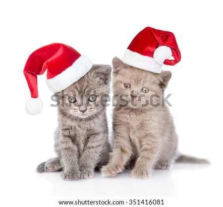 Portrait two cute kittens  in red santa hats. isolated on white background. - stock photo
