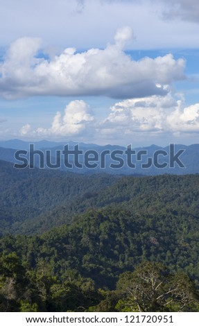 Portrait view of dense tropical rainforest in Malaysia - stock photo
