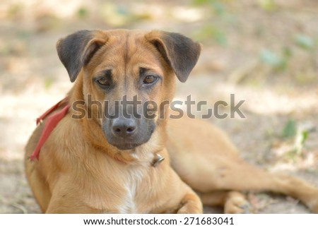 Portrait young dog on the ground - stock photo