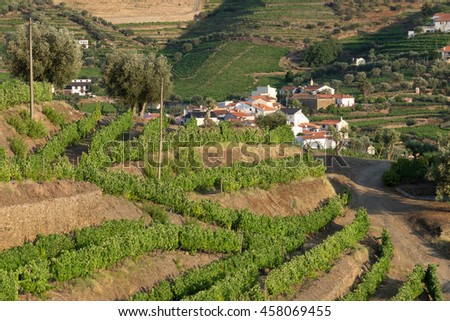 Portugal, Douro Valley, Douro River, Vineyards in Porto, a region that runs from the Spanish-Portugal border to the coast. UNESCO World Heritage site.  - stock photo