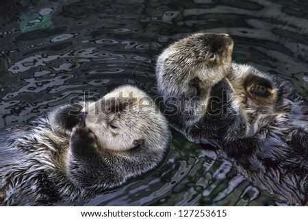 Portugal, sea otters - stock photo