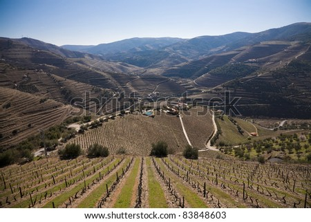 Portuguese port wine vineyards in Douro Valley, Portugal - stock photo