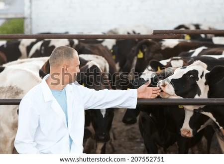 positive man on the farm cows - stock photo