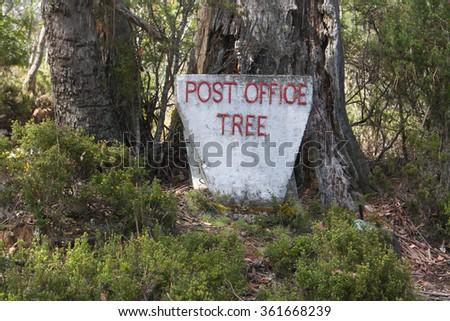 post office tree cradle mountain tasmania - stock photo