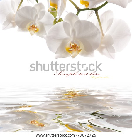 postcard. white orchids on the water - stock photo
