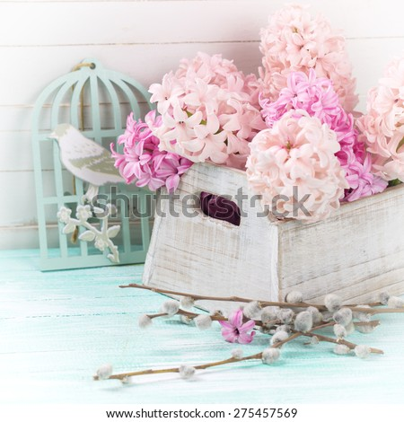 Postcard  with fresh pink  hyacinths in box and willow branches in ray of light on turquoise painted  wooden planks against white wall. Selective focus.  - stock photo