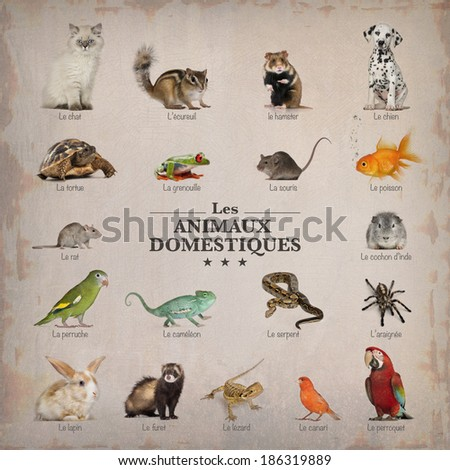 poster of pets in french