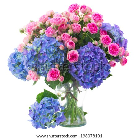posy of fresh pink roses and blue hortenzia flowers close up  in glass vase isolated on white background - stock photo