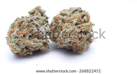 pot bud on white
