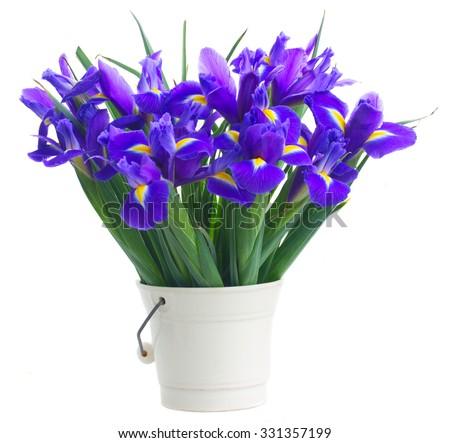 pot of  irises isolated on white background - stock photo